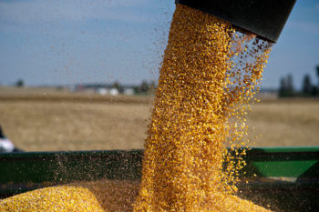 corn flowing out of a hopper