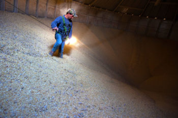 man in grain bin with safety line - safety